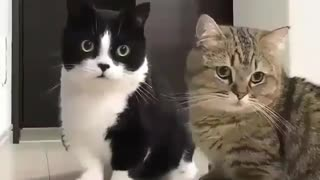two Cats Wondering what is going on