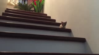Ladder Training Ninja Cat
