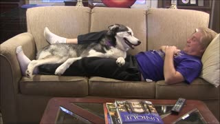 Needy Husky Makes Watching TV A Challenging Task - Video