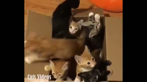 A Bunch of Cats sitting in A Carton Aand Coming out.