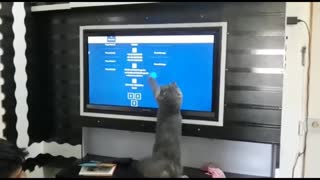 Cat playing with Video Game