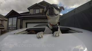 Dog uses sunroof to enjoy car ride - Video