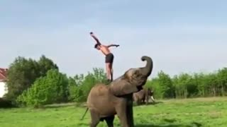 Playing with big elephant and jumping off him - Video
