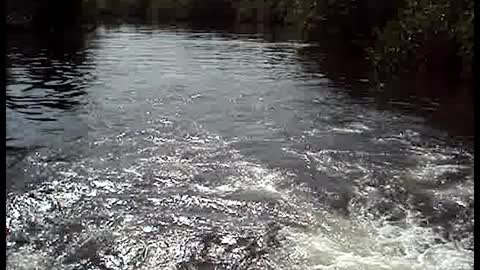 River Dolphins Show Tourists a Good Time