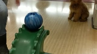 Bowling Doggo - Video