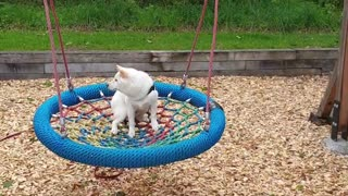 Confused dog not sure what to think of giant swing