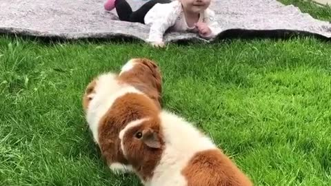 The Cute Baby Playing With The Little Rabbits.