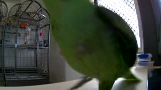 Parrot Clearly Doesn't Care for the Camera