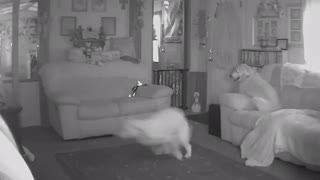 Dog goes insane after owner leaves home