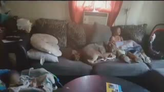 5 year old gets 50 stitches in face after dog attack - Video