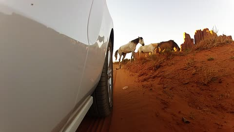 Driving through abandoned deserts with wild mustang horses running around!