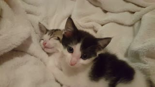 Kitten terrorizes his brother while trying to sleep  - Video