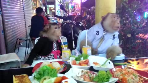 Monkey couple enjoy date night at restaurant
