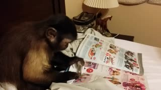 Undercover Monkey Shopping