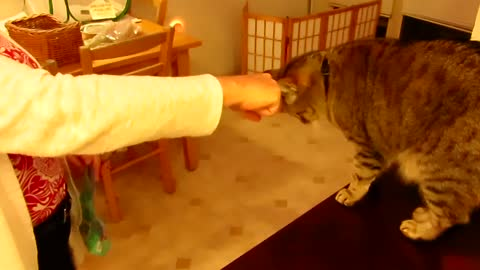Some Cats Just Don't Get the Concept of the FIST BUMP!