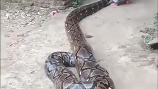 Playing with anaconda