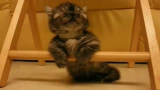 The kitten falls asleep to the sounds of a classical melody.