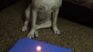 Singing happy birthday to dog with red cupcake and candle - Video