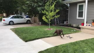 Owner Uses Drone To Exercise Dog - Video