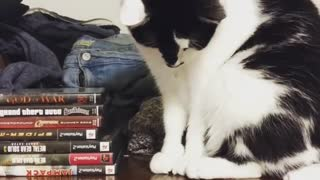 Black white cat drops coin off shelf - Video