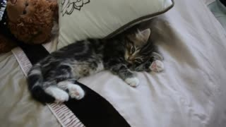 Adorable kitten develops her dragon roar - Video