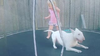 Playful dog absolutely loves jumping on trampoline - Video