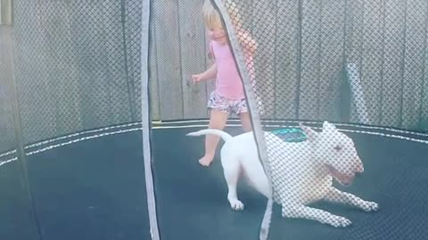 Playful dog absolutely loves jumping on trampoline