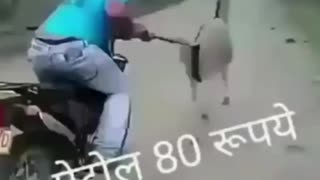Indian funny moments