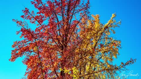 Thanksgiving Day 2020 - Fall Beauty in Citrus Heights, CA