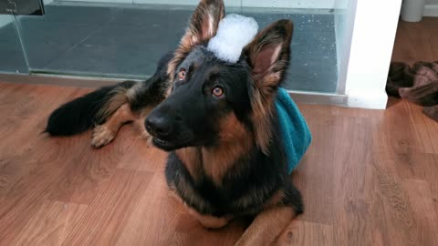 Gorgeous puppy has bubble hat ready for her bath