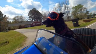 Motorcycle Sidecar Dog Country Ride