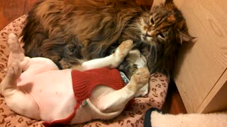 Patient Cat Tolerates Cuddles From Overly Affectionate Puppy