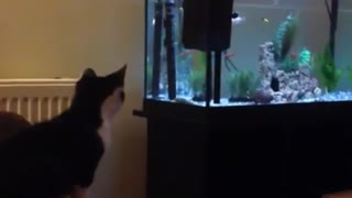 Cat tries to catch fish in aquarium, fails miserably