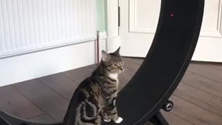 Racing Kitty Literally Sprints On Cat Wheel