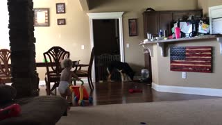 German Shepherd plays tag with Baby Boy  - Video