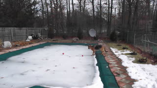 Puzzled German Shepherd wants his ball - Video