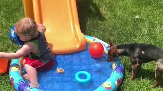 Puppy Slides Into Pool  - Video