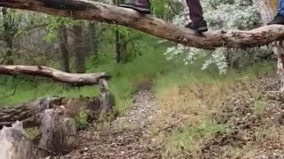 Guy stands on tree branch falls on back - Video