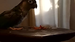 Rocky eating fruit pebbles