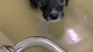 This puppy really isn't crazy about bath time
