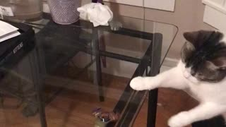 White grey cat fidget spinner on clear table - Video