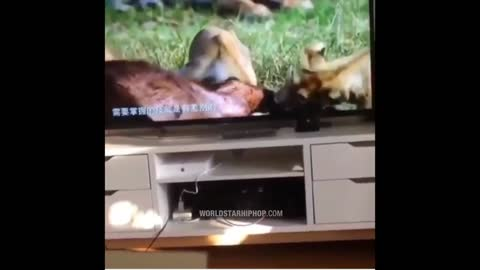This Cat Is Shook Watching Cats In The Wild