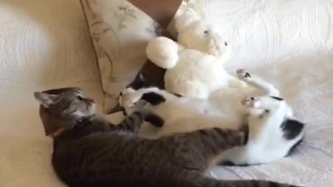 cats are fighting