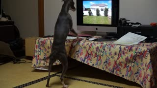 Greyhound desperately attempts to make contact with dog in video