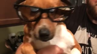 Music what is love brown dog with reflective sunglasses dancing wiggling while held by owner