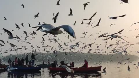 seagulls flying over a Body of Lake