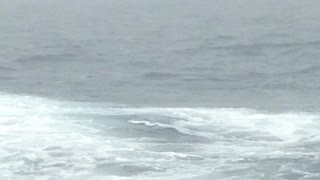 Humpback Whale Back Flip Caught On Camera - Video