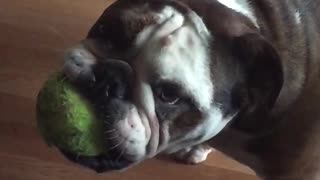 Dog toy in slow motion