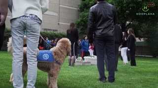 Funeral Therapy Dog Turns Sadness Into Smiles - Video