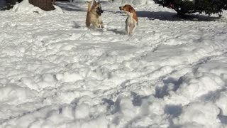 Two dogs running toward camera in snow